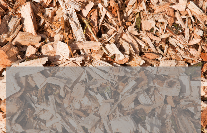 Biomass with CO2 storage presents unique opportunities